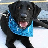 Adopt A Pet :: Tracker - Cumming, GA