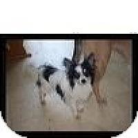 Adopt A Pet :: Oreo - Morristown, TN