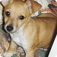 Adopt A Pet :: Sahuaro - Chandler, AZ