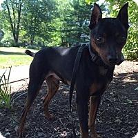 Adopt A Pet :: DJ (Courtesy Post) - Malaga, NJ