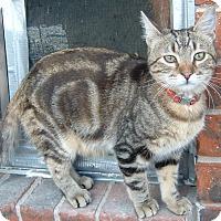 Adopt A Pet :: Brody - Farmington, AR