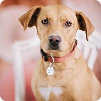 Adopt A Pet :: Lady - Portland, OR