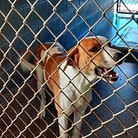 Adopt A Pet :: Bubba - Marianna, FL