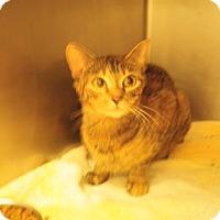 Adopt A Pet :: Aphrodite - Gulfport, MS
