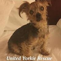 Adopt A Pet :: Rocky G - Homestead, FL