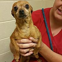 Adopt A Pet :: Judde - West Valley, UT