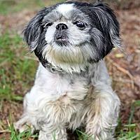 Adopt A Pet :: Jalissa - Waldorf, MD