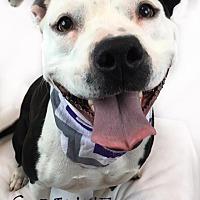 Adopt A Pet :: Corinne - Toledo, OH