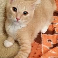 Adopt A Pet :: Katie - Nogales, AZ