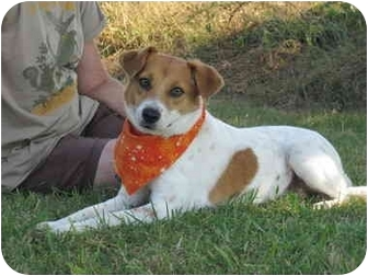 Hound (Unknown Type) Mix Dog for adoption in Portsmouth, Rhode Island - Sweetie