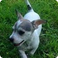 Adopt A Pet :: Dill - Staunton, VA