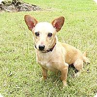 Adopt A Pet :: Robyn - Mocksville, NC