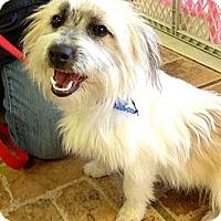 Adopt A Pet :: Riley - North Palm Beach, FL