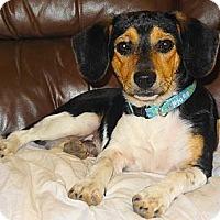 Adopt A Pet :: BUSTER - Parsons, TN