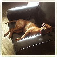 Adopt A Pet :: Mellie - Adoption Pending - Vancouver, BC