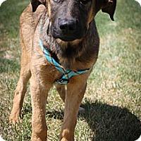 Adopt A Pet :: Mariah - Broomfield, CO