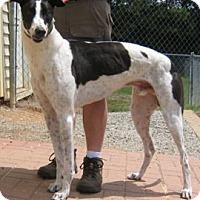 Adopt A Pet :: Dakota - Oak Ridge, NC