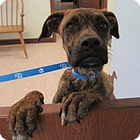 Adopt A Pet :: Sylvester - North Olmsted, OH