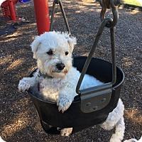 Adopt A Pet :: Breezy - San Antonio, TX