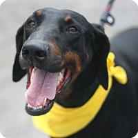 Adopt A Pet :: Poncho - Canoga Park, CA