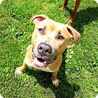 Adopt A Pet :: Titus - Belleville, MI