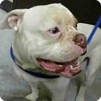 Adopt A Pet :: URGENT on 07/15 BIG BEAR - San Bernardino, CA
