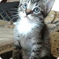 Adopt A Pet :: Art-adoption pending - Hanna City, IL