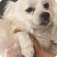 Adopt A Pet :: Liam - Thousand Oaks, CA