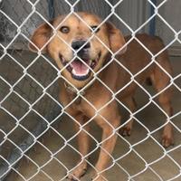 Adopt A Pet :: Cinder - Brownwood, TX