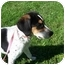 Photo 1 - Beagle Mix Dog for adoption in Shelbyville, Kentucky - Scrappy