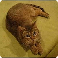 Adopt A Pet :: Dixie--PETSMART - Muncie, IN