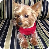 Adopt A Pet :: Toby - Yakima, WA