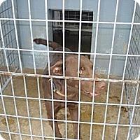 Adopt A Pet :: Kyan - Windsor, MO