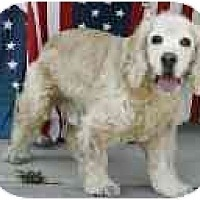 Adopt A Pet :: Holiday - San Diego, CA