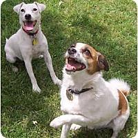 Adopt A Pet :: SANTO & PAYTON - Phoenix, AZ