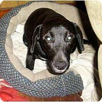 Adopt A Pet :: Bobbie Sox - Glenpool, OK