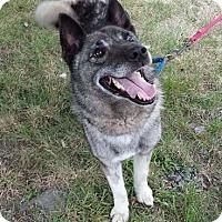 Adopt A Pet :: Tiberius - Parsippany, NJ
