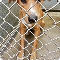 Adopt A Pet :: Riley - ADOPTED! - Zanesville, OH