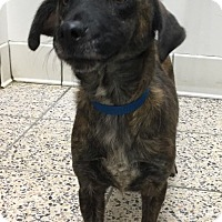 Adopt A Pet :: Sammi - North Olmsted, OH
