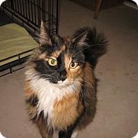 Adopt A Pet :: Ariel - Fallon, NV