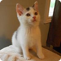 Adopt A Pet :: Lazzara-Adoption Pending - Richmond Hill, ON