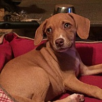 Adopt A Pet :: Jada - Loxahatchee, FL