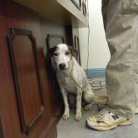 Jack Russell Terrier Mix Dog for adoption in Monticello, Georgia - lonesome