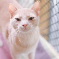 Adopt A Pet :: Dasher - New Freedom, PA