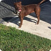 Adopt A Pet :: Mocha - West Palm Beach, FL