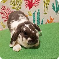 Adopt A Pet :: Maggie - West Palm Beach, FL