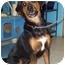 Photo 1 - Rottweiler/Hound (Unknown Type) Mix Dog for adoption in Port Hope, Ontario - Nikita