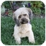 Photo 1 - Shih Tzu Mix Dog for adoption in Newport Beach, California - MELISSA