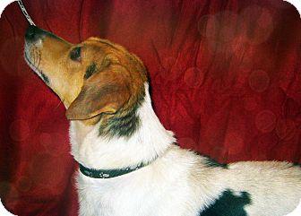 Beagle Mix Dog for adoption in Prole, Iowa - Casper