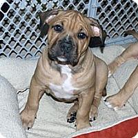 Adopt A Pet :: Winston - Minneola, FL